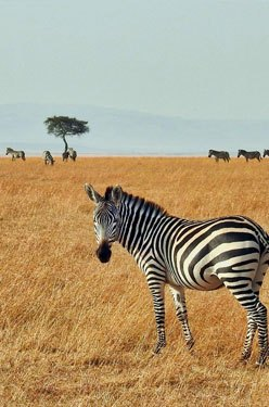 Intégrer une HighSchool en Afrique du Sud